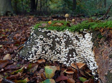 Mushrooms, Mushroom, Autumn, Moss, Nature, White, Green