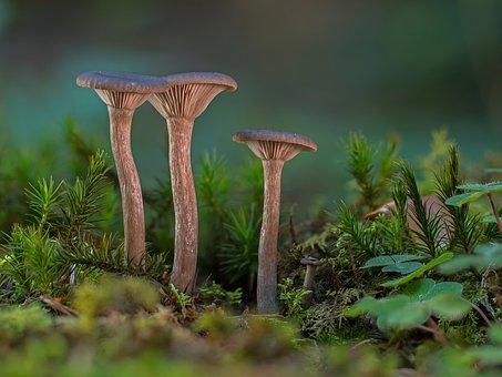 Mushroom, Small Mushroom, Mushrooms
