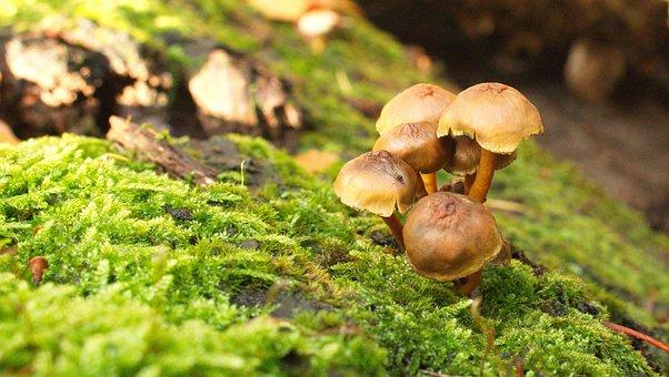 Forest, Mushroom, Mushrooms, Nature, Autumn, Moss