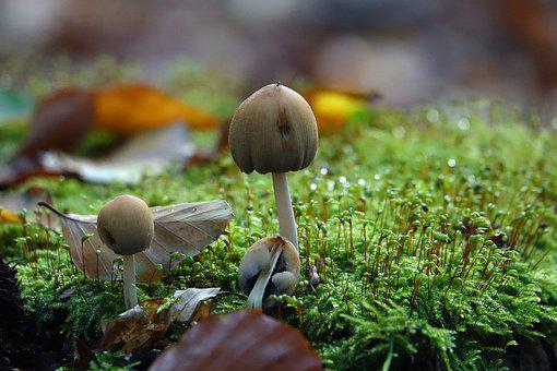 Mushrooms, Mushroom, Autumn, Moss, Nature