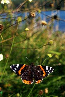 Butterfly, Grass, Wallpaper, Figure, Garden, Nature