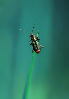 Insect, Nature, Spring, Scarab, Grass