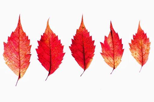 Autumn, Leaves, Red, Yellow, Orange, Color, Season