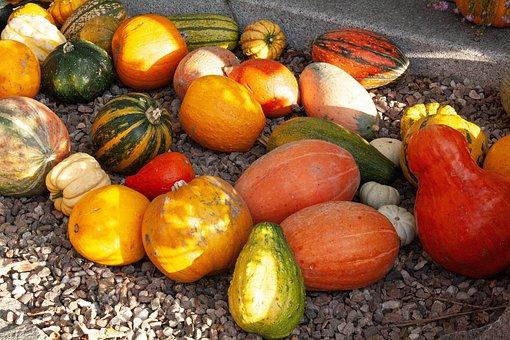 Autumn, Pumpkin, Orange, Halloween, In The Fall Of