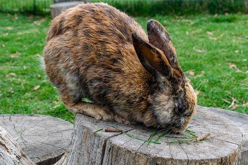 Rabbit, Hare, Rabbit Ears, Cute, Grass, Animal World