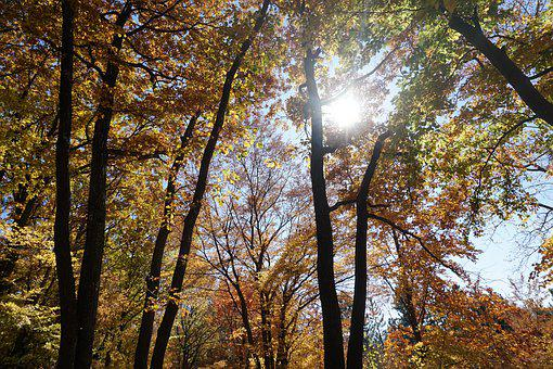 Nature, Autumn, Trees Forest, Forest, Colorful, Woods
