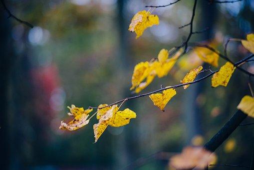 Autumn, Foliage, Colors, Yellow, Beech, Colorful, Mood