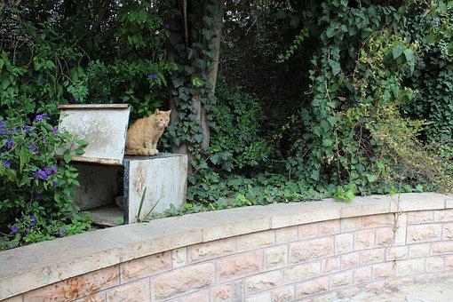 Cat, Alley Cat, Feline, Kitten, Whiskers, Pet, Street