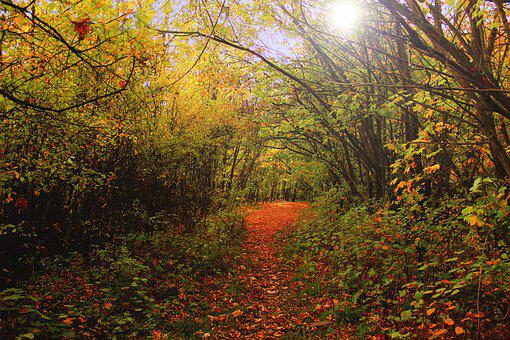 Autumn, Forest, Oct, Mood, Colorful, Light, Mystery
