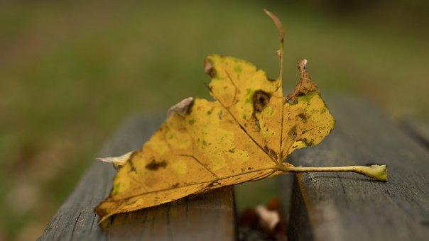 Park, Bank, Autumn, Nature, Leaf, Fall Leaves, Mood