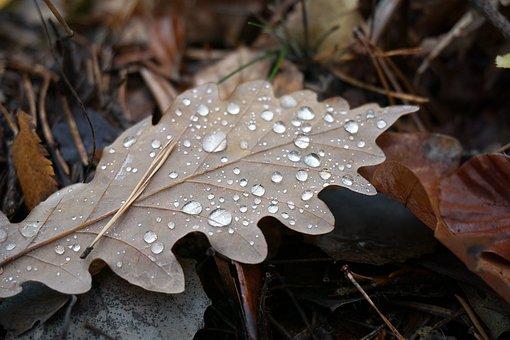 Leaf, Leaves, Oak Leaf, Drop Of Water, Beaded, Rain
