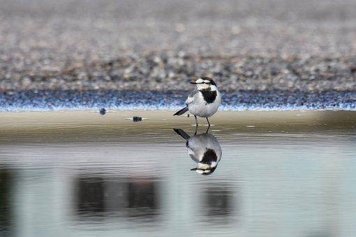 Animal, Bird, Wild Birds, High Security Level, Ground