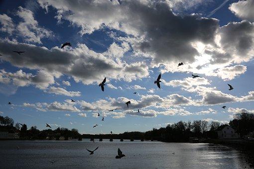 Sky, Clouds, Water, Gulls, Birds, Landscape, Nature