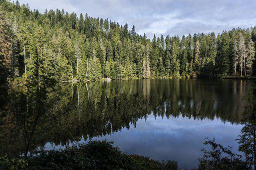 Lake, Glass Waldsee, Black Forest, The Wolftal Valley