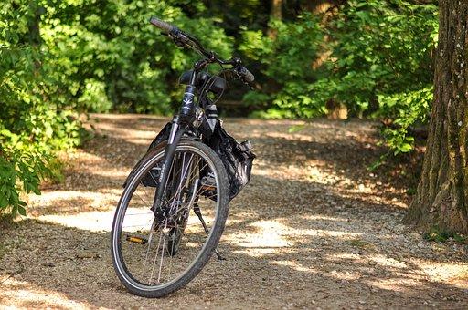 Bike, Forest, Trees, Autumn, Couple, Bank, Community