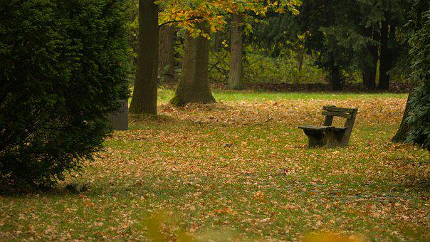 Park, Bank, Autumn, Nature, Fall Leaves, Mood