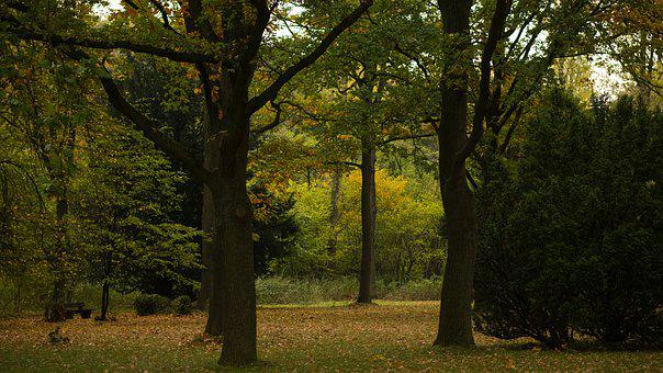 Park, Autumn, Nature, Leaves, Fall Leaves, Tree