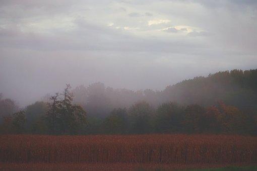 Autumn Morning, Field, Fog, Nature, Outdoor, Gold