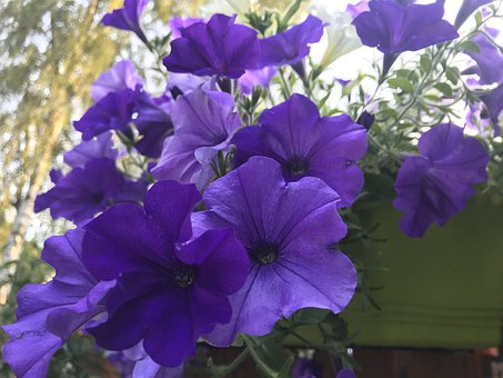 Purple, Flowers, Flower, Summer