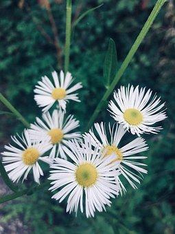 Flowers, Nature, Meadow, Plant, Garden, Flora, Yellow