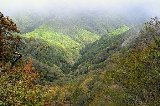 Fog, Mountain, Landscape, Natural, Wood, Light