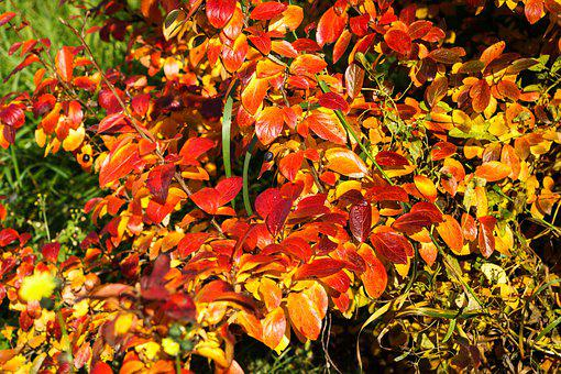 Autumn, Foliage, Colorful, Fall Foliage, Shrub, Mood