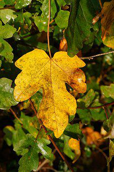 Autumn, Fall Foliage, Leaves, Yellow, Forest, Nature