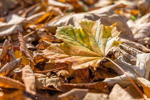 Autumn, Leaf, Leaves, Autumn Colours, Mood, Fall Leaves