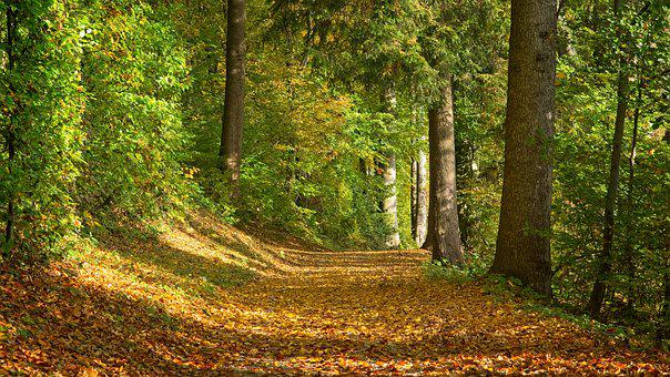 Autumn, Forest Path, Away, Nature, Trees, Mood