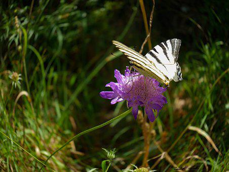 Flower, Nature, Butterfly
