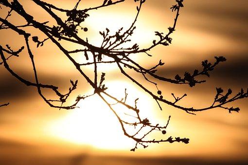 Morning, Light, Sunrise, Nature, Landscape, Sky, Mood