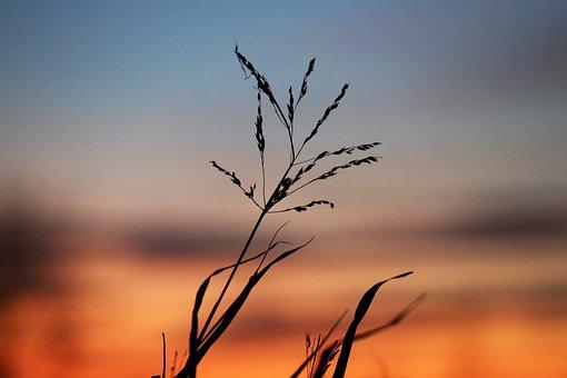 Evening, Sunset, Grass, Meadow, Afterglow, Mood, Nature