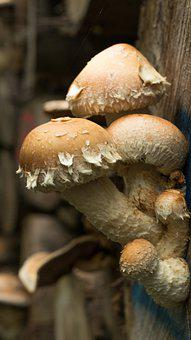 Mushrooms, Wood, Park, Autumn, Nature