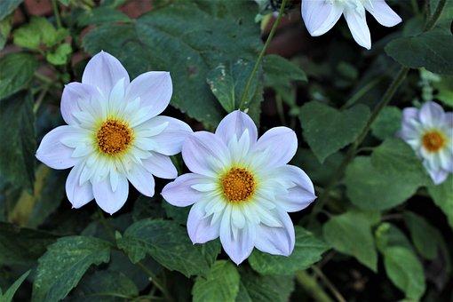 Flower, Plant, Nature, Blossom, Bloom, Floral