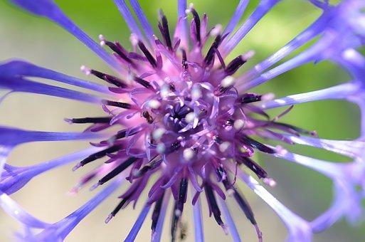 Flower, Spring, Nature, Bloom, Garden