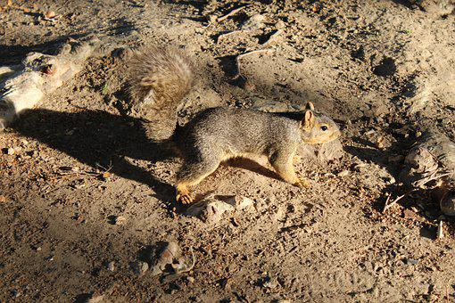 Squirrel, Scenic, Nature, Wild, Rodent, Park, Outdoor