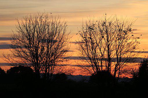 Two Trees, Evening, Sunset, Grass, Landscape, Afterglow