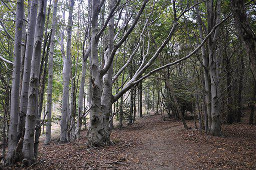 Forest, Trail, Nature, Woods, Path, Trees, Trekking
