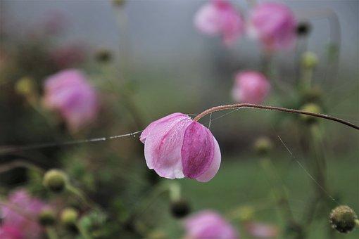 Glow, Faded, Kosmea, Dawn, The Fog, Trapped, Flower