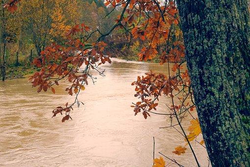 Landscape, Leaf, Tree, Nature, Water, River, Autumn