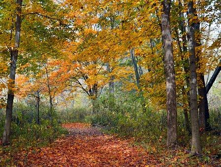 Trees, Forest, Leaves, Autumn, Fall, Season, Nature
