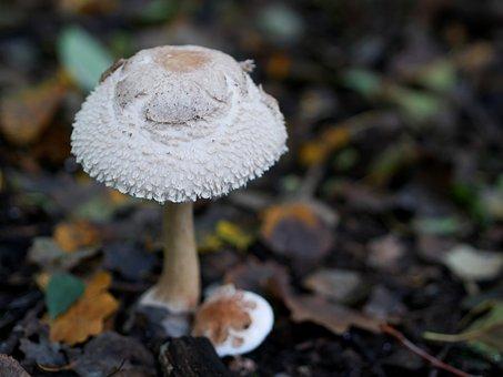 Mushroom, White Autumn, Forest, White, Nature, Hat