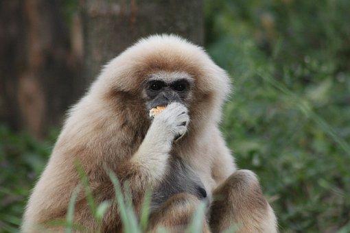 Monkey, Primate, Mammal, Animal World, Animal, Zoo