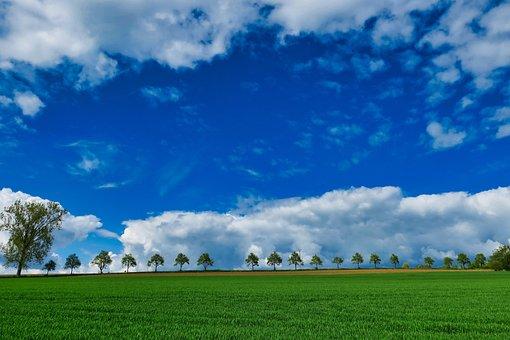 Arable, Sky, Avenue, Tree Lined Avenue