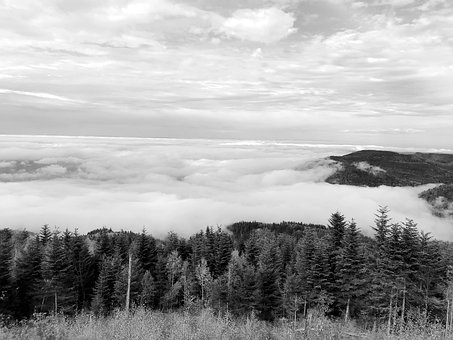 Forest, Clouds, Landscape, Sky, Trees, Black White