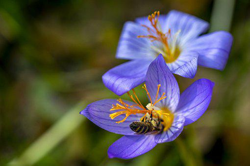 Bee, Flower, Fall, Autumn, Insect, Nature, Bloom