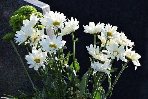 White Chrysanthemum, Blooming, Vase, Bouquet