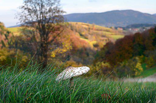 Mushroom, Kite, Autumn, Tasty, Nature, Closeup, Wild