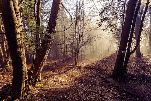 Forest, Nature, The Sun, Landscape, Tree, Green, Autumn