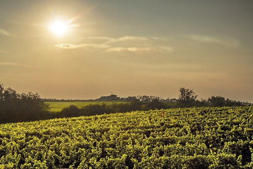 Wine, Vineyard, Landscape, Grapes, South Moravia, Sun
